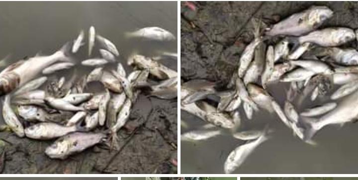 সুন্দরগঞ্জের ছাপরহাটিতে পুকুরে বিষ দিয়ে মাছ মেরে দেড় লাখ টাকার ক্ষতি সাধন